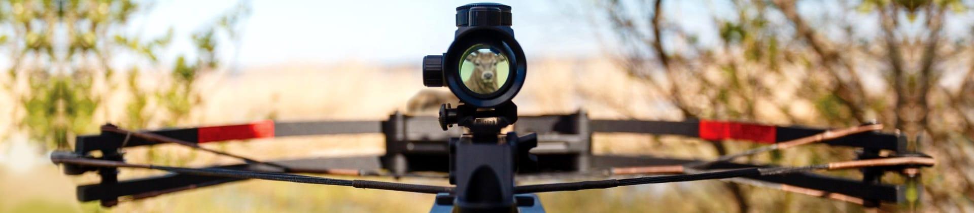 Best Crossbows for Deer Hunting Reviewed in Detail